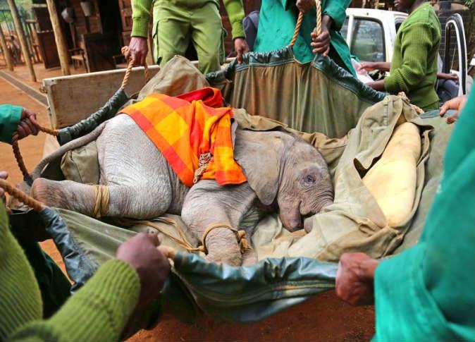 إنقاذ فيل رضيع من الموت في بئر بكينيا