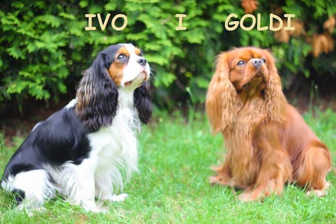 Goldi i Ivo