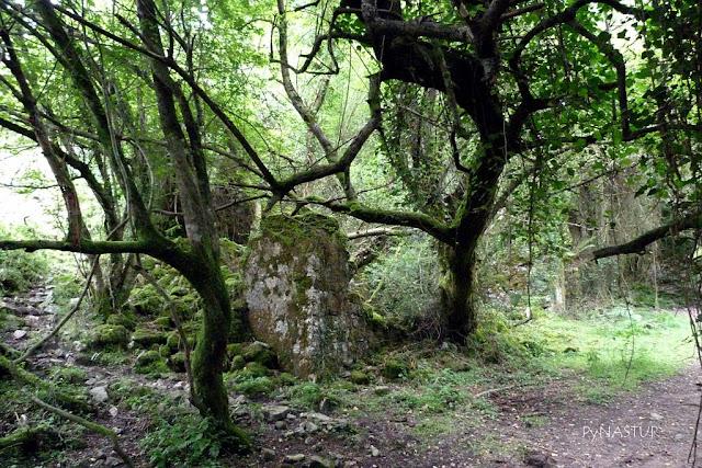 Mina de La Toya - Hayedo de La Biescona - Asturias
