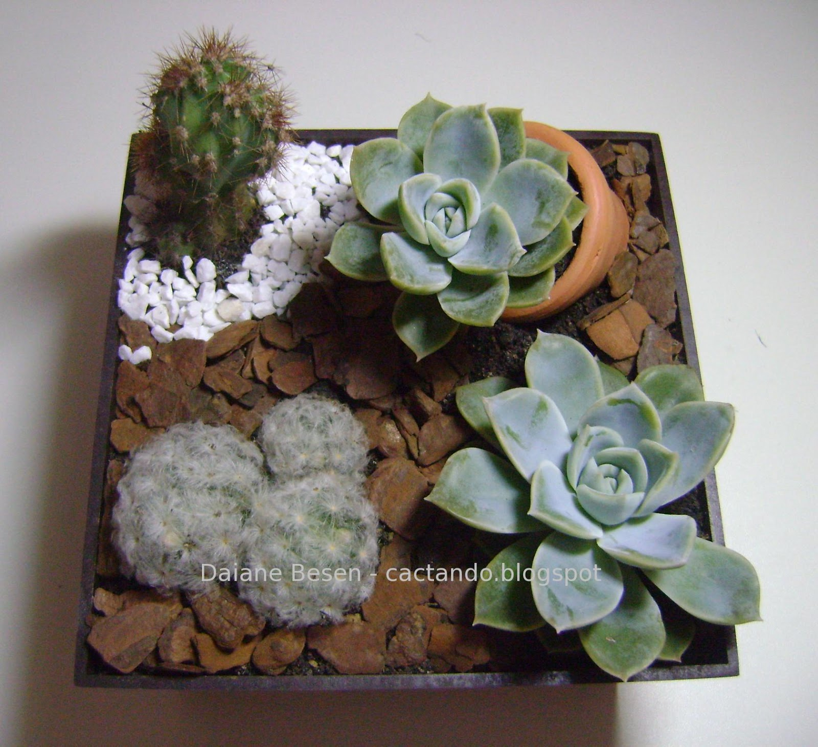 mini jardim suculentas:Mais um mini jardim! Neste foram usadas plantas maiores, um jardim no