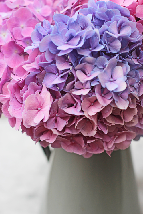 Of Spring And Summer Flowers By Ingrid And Titti