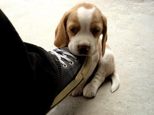 aww Such a Cute baby Dog - cutipedia
