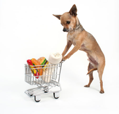 Image Result For What Stores Can Dogs Go Into
