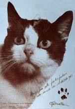 Felicette, kucing pertama yang terbang ke luar angkasa