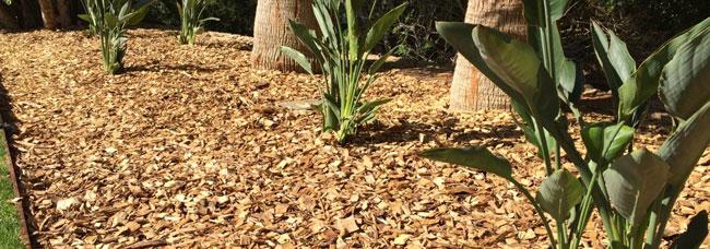 Comprar corteza de pino madera de pinares arreglos para - Corteza de pino ...