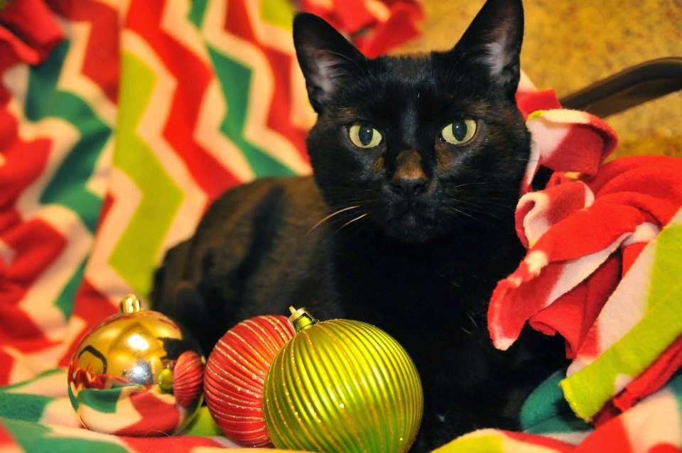 As the World Purrs: December 2014