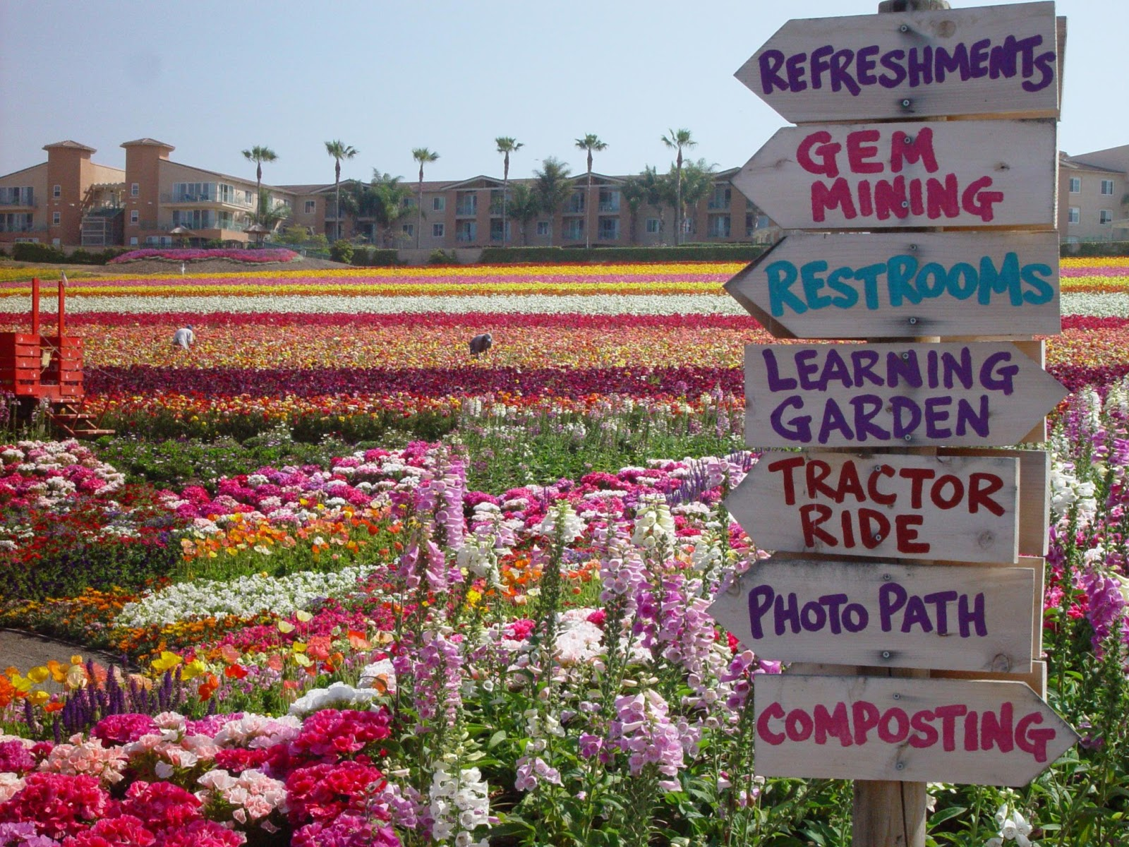 Bon Carlsbad Flower Fields