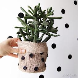 5 DIY avec des plantes