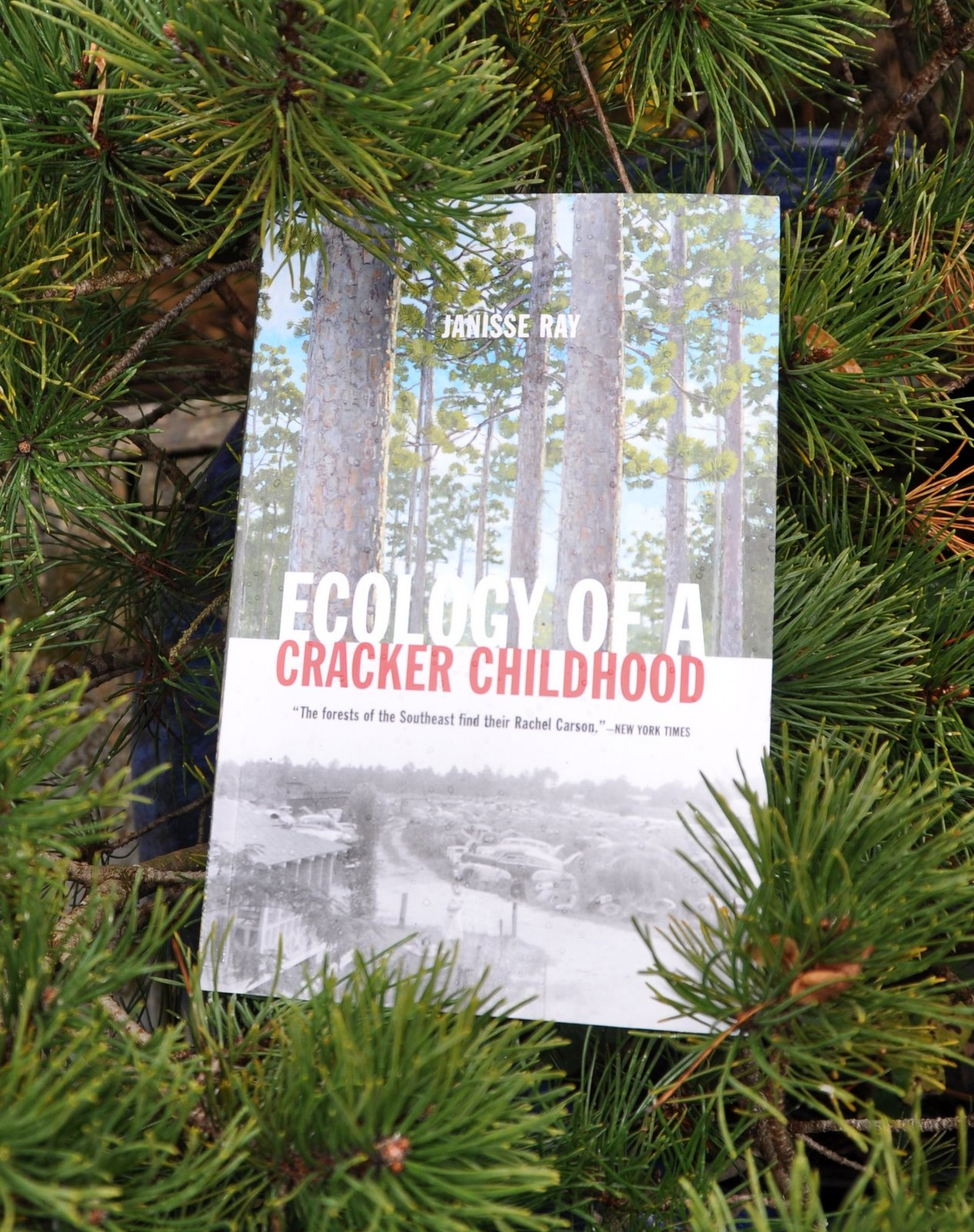 ecology of a cracker childhood Janisse ray (born 1962) is an american writer, naturalist and environmental activist ecology of a cracker childhood, memoir (minneapolis: milkweed editions, 2000.