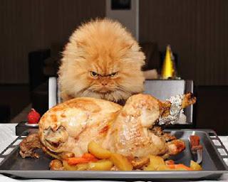cat eats turkey