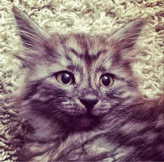 Katten vår Vigdis