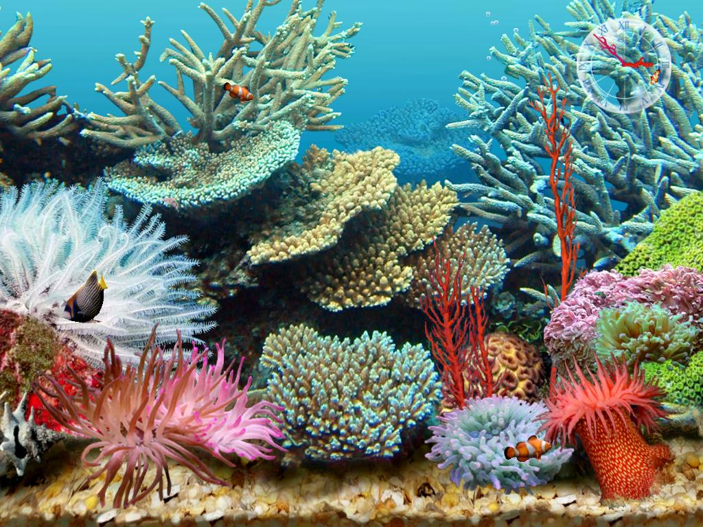 Rock world 2 0 3d tropical aquarium scene 3 free for Moving fish screensaver
