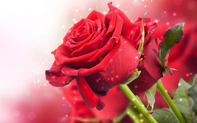 Foto van rode rozen