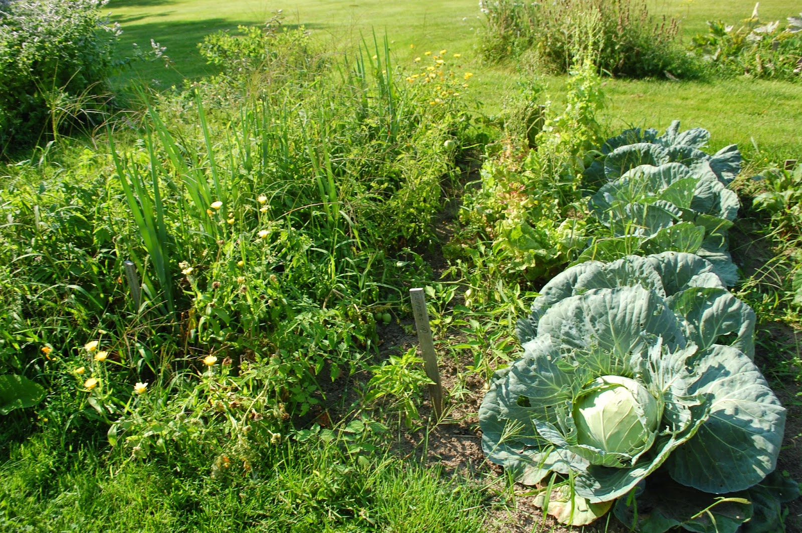 Sprouts The Wilder Homestead Heritage Gardens Part 1