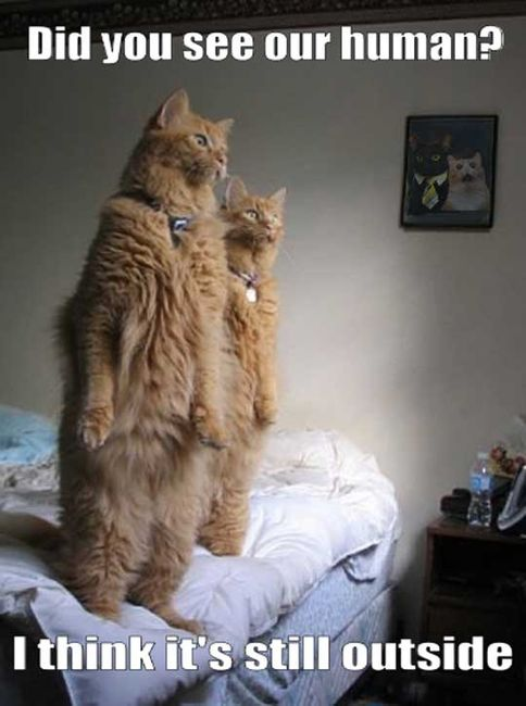 In The Parallel Universe - Did You See Our Human - I Think It's Still Outside