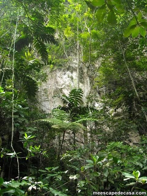 Pared rocosa, Cordillera Escalera (San Martín, Perú)