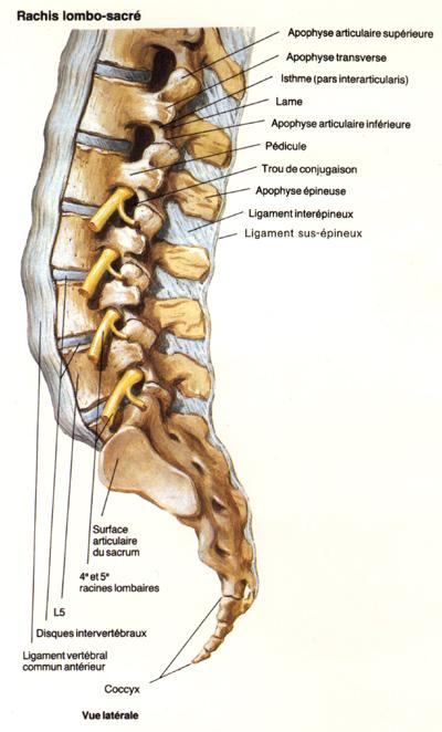 Banotchnyj le massage à la douleur dans le cou