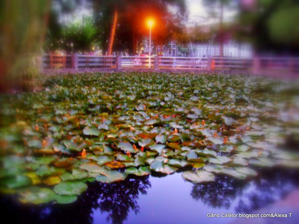 The natural reserve of water lilies