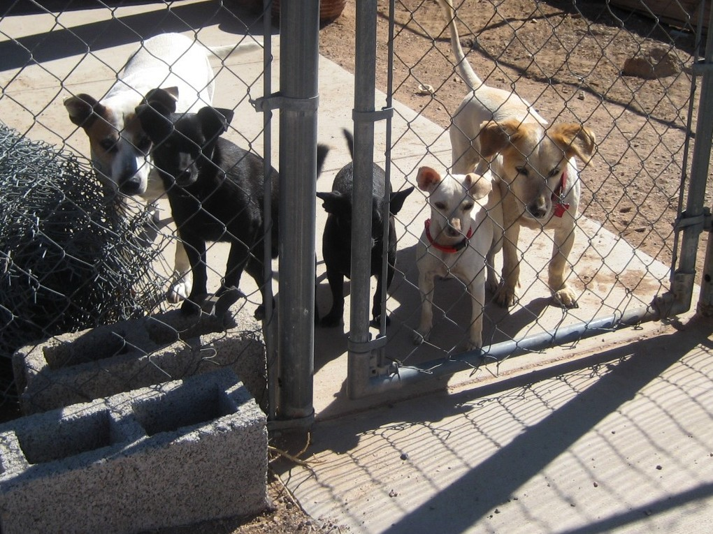 Rescue Dogs Columbus Indiana