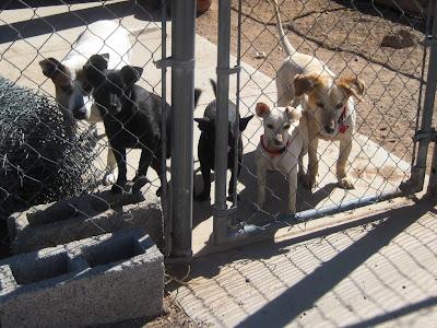 Dog Rescue Columbus Ga