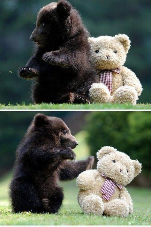 Bear and his friend