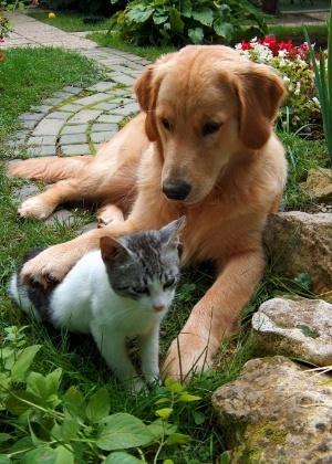 gato e cachorro no jardim