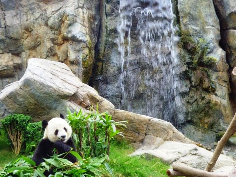 panda hk