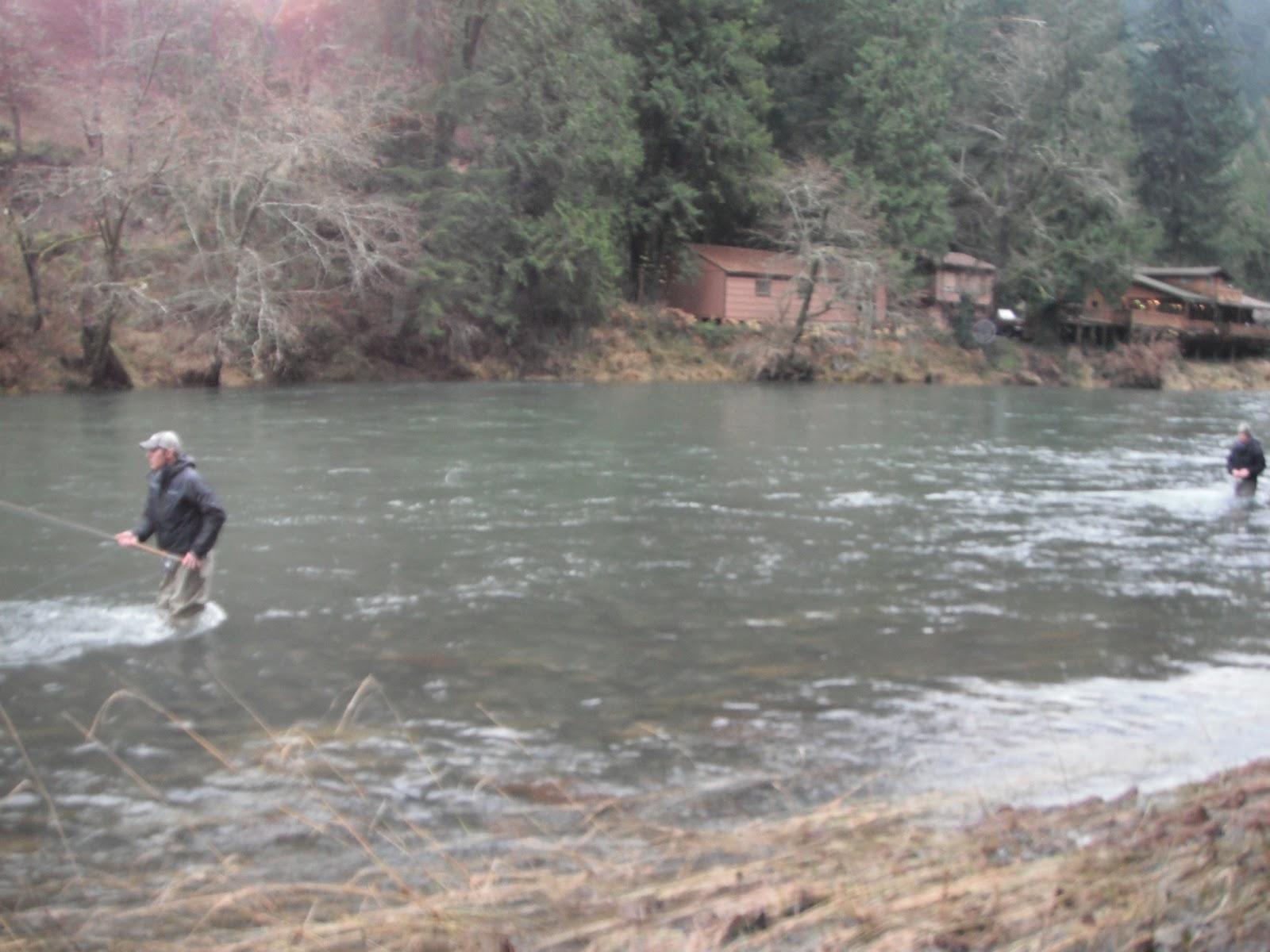 Where i have fished kalama river wa winter steelhead for Kalama river fishing