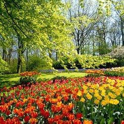 Flowers Desktop Wallpaper