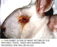 cosmetic_animal_testing_06.jpg (459×377)