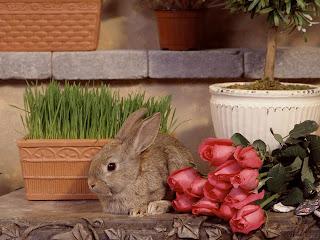 Conejo de verdad o de decoración?