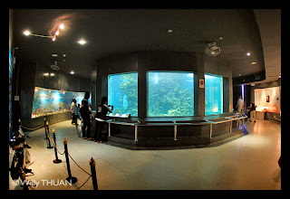 Inside Cape Panwa Aquarium