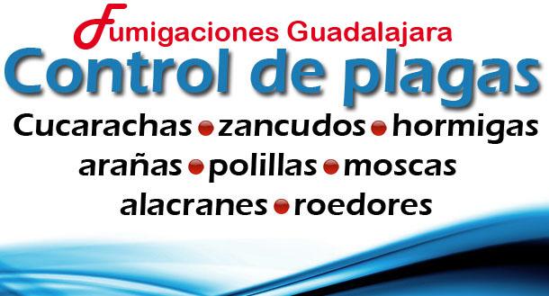 Abril 2012 fumigaciones en guadalajara - Plaga de hormigas en mi casa ...