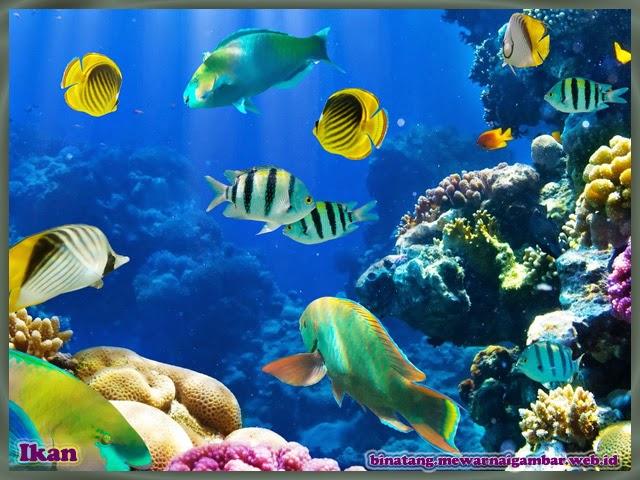 gambar aneka jenis ikan