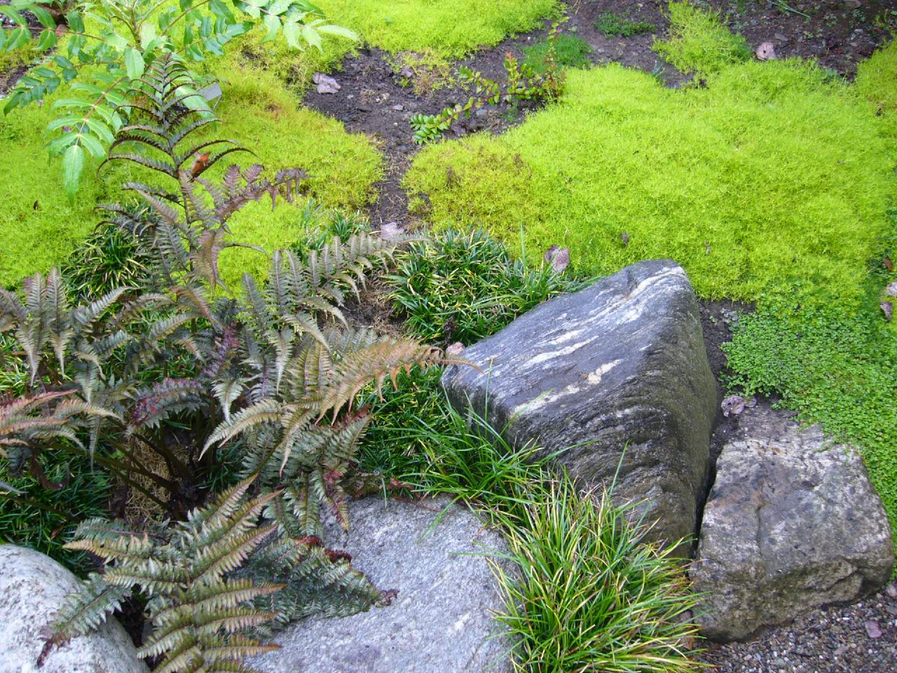 Japanese zen garden japanese tea house for Japanese zen garden