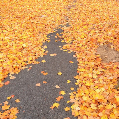 yellow leaves on a gray paved road