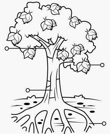 Patricienta y sus mikos partes de los rboles y de las flores for Imagenes de las partes del arbol