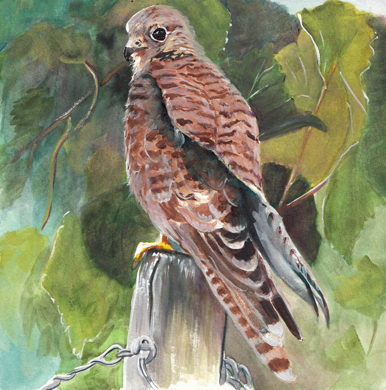 Hawk painting watercolor - photo#26