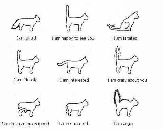 cat tail signals