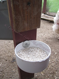 While layer feed contains calcium, an additional source of calcium, such as crushed oyster shells or clean eggshells, should be made available to laying hens in a separate dish, apart from the feed.