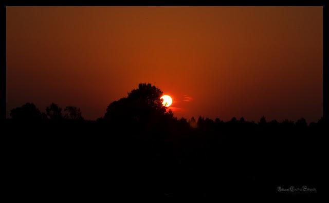 Abendhimmel mit einer untergehenden Sonne die hinter einem Baum hervor scheint.