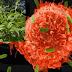 Το Κινέζικο φυτό lei gong teng σκοτώνει τον καρκίνο. Το κρυβουν γιατι ειναι..ΤΣΑΜΠΑ