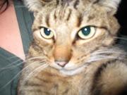 LETTUCE CAT. with 0 comentarios Etiquetas: FUNNY. LOVE THE LETTUCE ! the lettuce cat