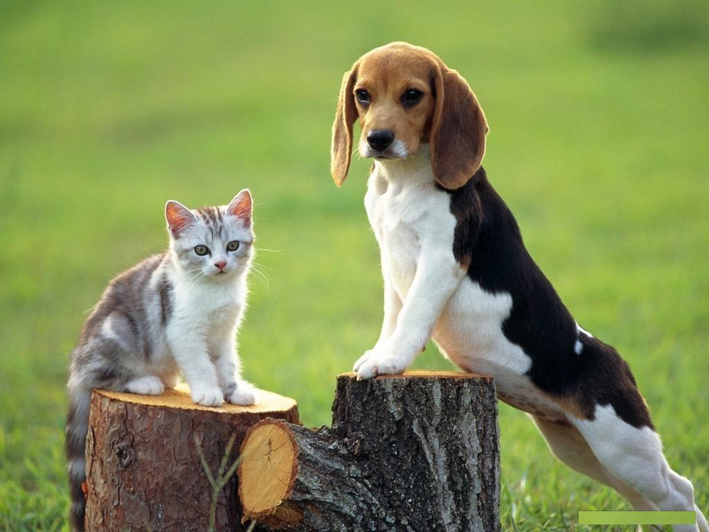 Most Inspiring Cute Dog N Cat Wallpapers - Dog-wallpaper+(2)  Snapshot_934072 .jpg