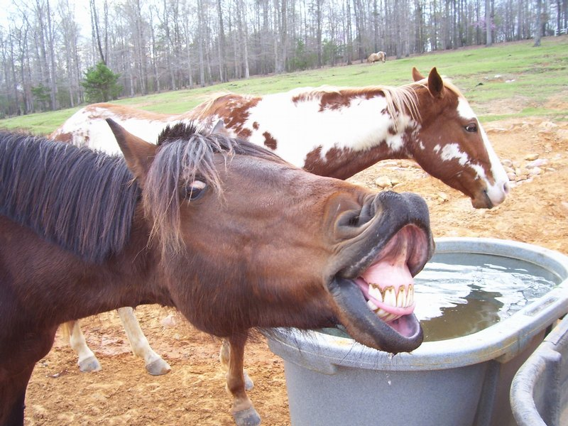 Funny Videos: Funny horse animals Boom HD wallpapers