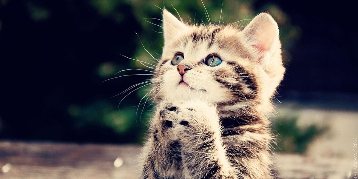 Cute Cat 300+ Muhteşem HD Twitter Kapak Fotoğrafları