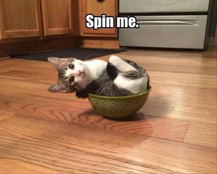 30 Funny animal captions - part 38, funny animal pictures with captions, animal photos with sayings