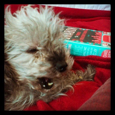 Murchie roars, or maybe yawns, in front of a hardcover copy of The Yiddish Policemen's Union. The turquoise spine and portions of the black, red, and white front cover are visible.
