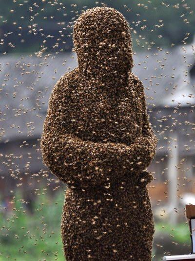 Wasps Vs Hornets
