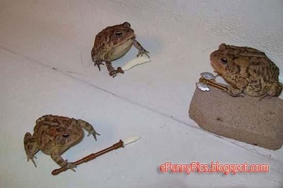Teenage Mutant Ninja Frog